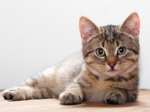 cats-kitten-backgrounds-wallpapers